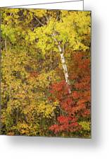 Autumn Impressions Greeting Card