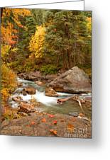 Autumn In Alpine Loop Greeting Card
