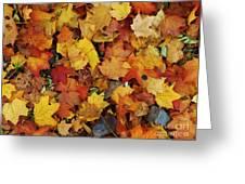 Autumn In Canada Greeting Card