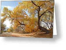 Autumn In Cdo Wash Greeting Card