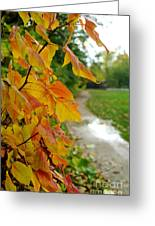 Autumn In Ellenberger Greeting Card