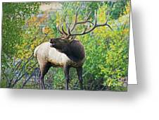 Autumn In Estes Park Greeting Card