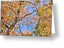 Autumn In Full Swing Greeting Card