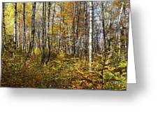 Autumn In The Birches Forest Greeting Card
