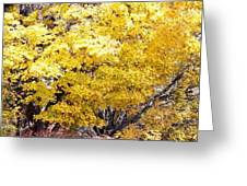 Autumn In Tennessee Greeting Card