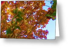 Autumn In The Canopy Greeting Card