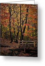 Autumn In The Rambles Greeting Card