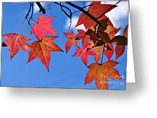 Autumn In The Sky Greeting Card