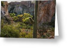 Autumn In The Sonoran  Greeting Card