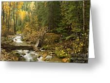 Autumn In The St Joe Greeting Card