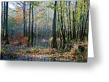 Autumn In The Swamp Greeting Card