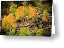 Autumn In The Uinta Mountains Greeting Card