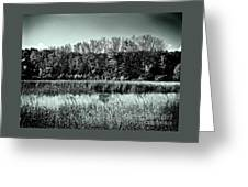 Autumn In The Wetlands - Black And White Greeting Card