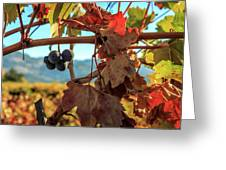 Autumn In The Wine Country Greeting Card
