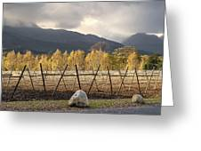 Autumn In The Winelands Greeting Card