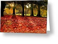 Autumn In Woodthorpe Greeting Card