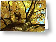 Autumn Is My Favourite Colour Greeting Card