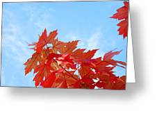 Autumn Landscape Fall Leaves Blue Sky White Clouds Baslee Greeting Card