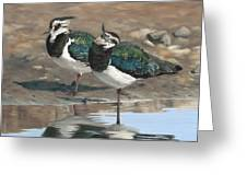 Autumn Lapwings Greeting Card