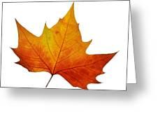 Autumn Leaf 1 Greeting Card
