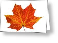 Autumn Leaf 3 Greeting Card