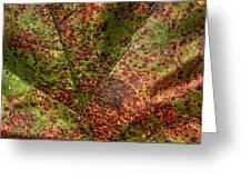 Autumn Leaf Detail Greeting Card