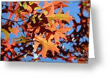Autumn Leaves 17 Greeting Card