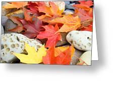 Autumn Leaves Art Print Coastal Fossil Rocks Baslee Troutman Greeting Card