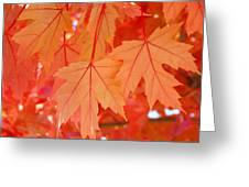 Autumn Leaves Art Prints Orange Fall Leaves Baslee Troutman Greeting Card