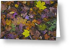 Autumn Leaves At Side Of Road Greeting Card
