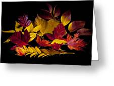 Autumn Leaves Greeting Card by Barry C Donovan