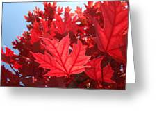 Autumn Leaves Fall Art Bright Red Leaves Baslee Troutman Greeting Card