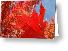 Autumn Leaves Fall Art Red Orange Leaves Blue Sky Baslee Troutman Greeting Card