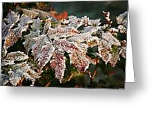 Autumn Leaves In A Frozen Winter World Greeting Card