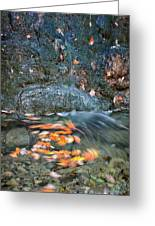 Autumn Leaves In Waterfall Greeting Card