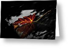Autumn Leaves... Greeting Card