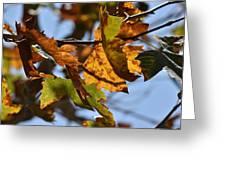 Autumn Leaves Macro 1 Greeting Card