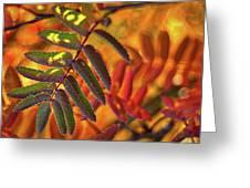 Autumn Leaves - Patagonia Greeting Card