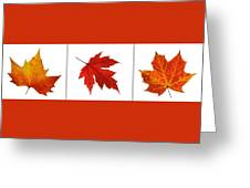 Autumn Leaves Triptych Greeting Card