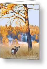 Autumn Light ... Montana Art Photo Greeting Card