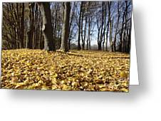 Autumn Maple Forest - Massachusetts Usa Greeting Card