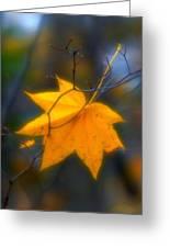 Autumn Maple Leaf Greeting Card
