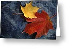 Autumn Maple Leaf Pair On Moody Rock Greeting Card