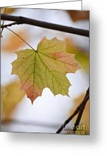 Autumn Maple Leaf Vertical Greeting Card