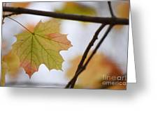 Autumn Maple Leaves Horizontal Greeting Card