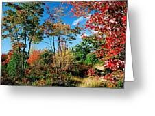 Autumn Maples Greeting Card