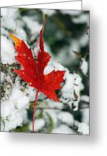 Autumn Meets Winter Greeting Card