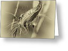 Autumn Milkweed 7 - Sepia Greeting Card