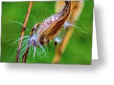 Autumn Milkweed 7 Greeting Card