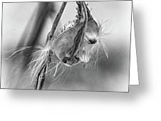 Autumn Milkweed 9 - Bw Greeting Card